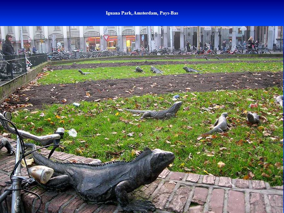 Iguana Park, Amsterdam, Pays-Bas