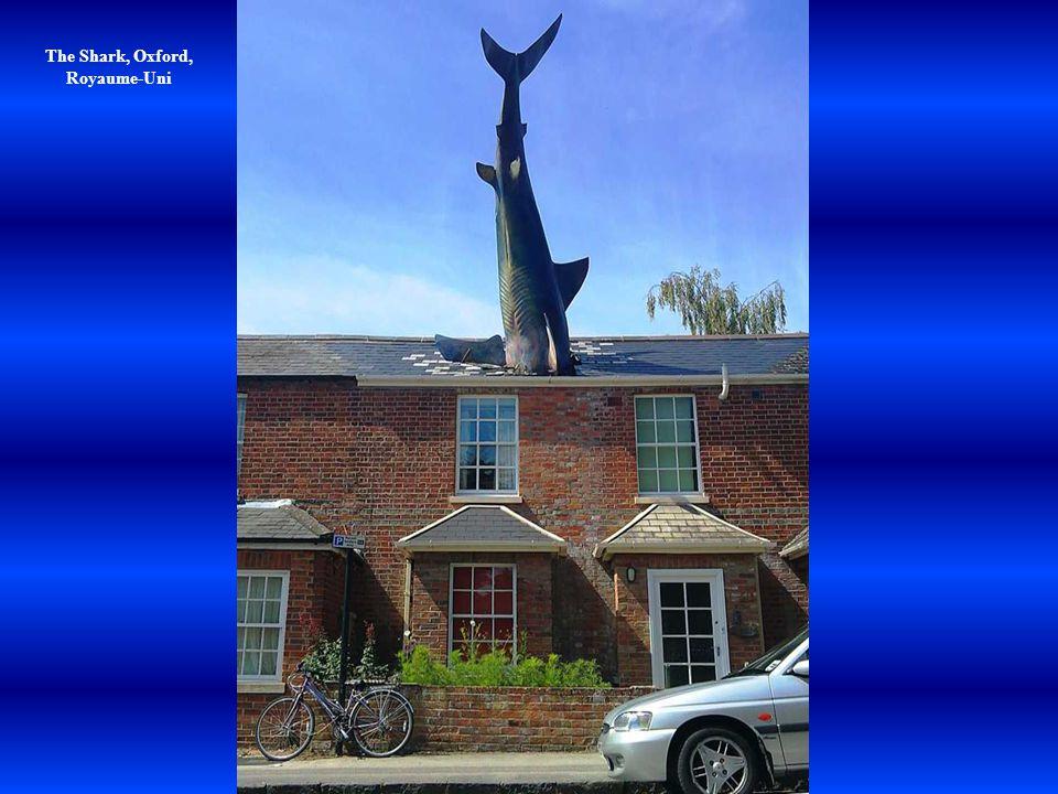 The Shark, Oxford, Royaume-Uni