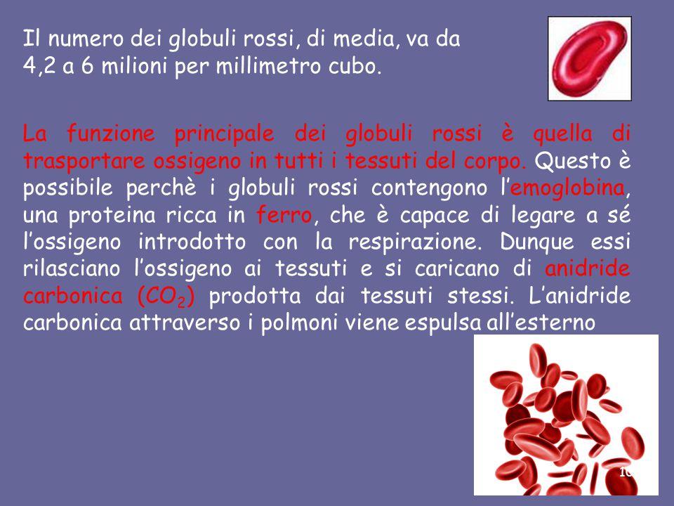 La parte corpuscolata Globuli Rossi Come altri elementi del sangue, i globuli rossi vengono prodotti nel midollo delle ossa e sono prive di nucleo.