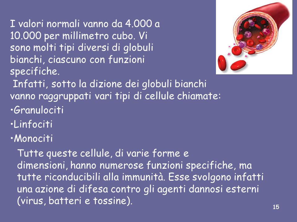 Globuli Bianchi I globuli bianchi (o leucociti) sono cellule provviste di nucleo prodotte nel midollo osseo, nelle ghiandole linfatiche, nella milza.