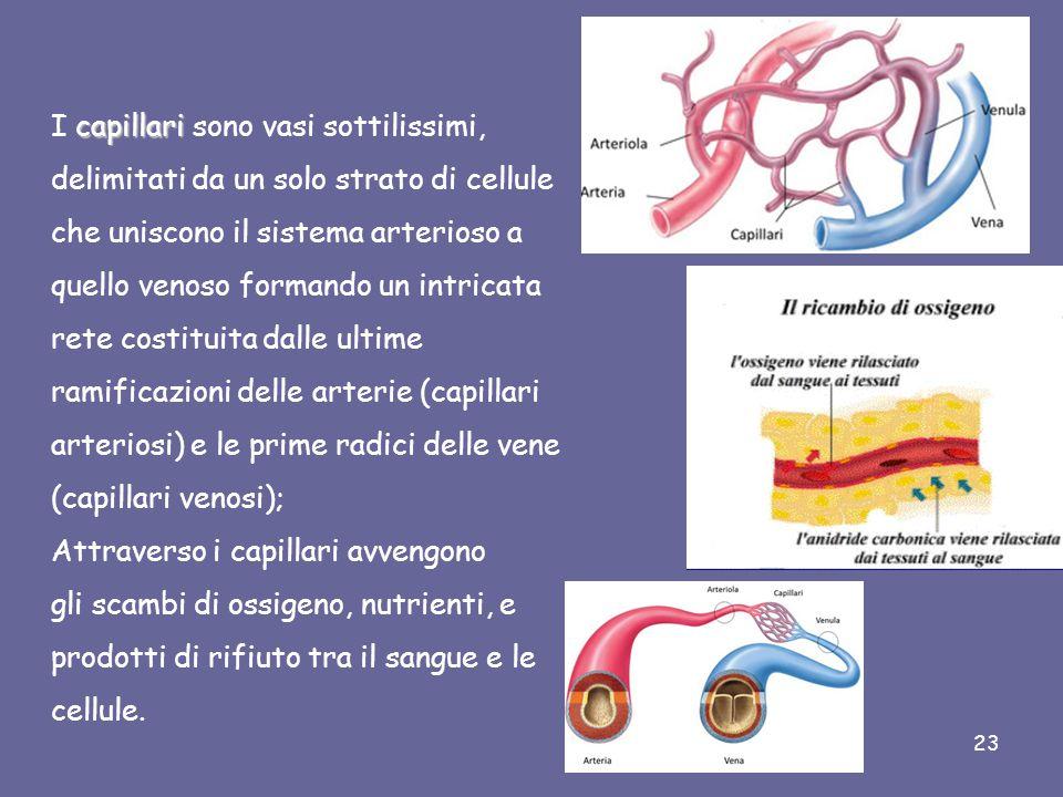 I VASI SANGUIGNI arterievenecapillari I vasi sanguigni si dividono in arterie, vene e capillari.