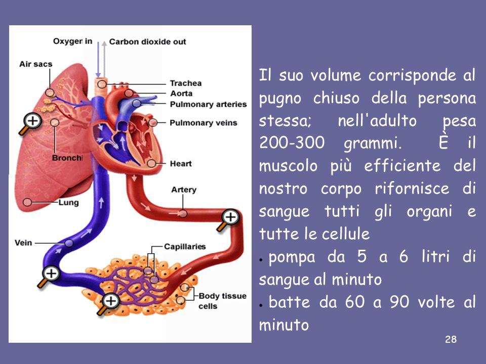 Il Cuore PERICARDIO Il cuore è l'organo principale dell'apparato circolatorio; è un muscolo a forma di cono rovesciato, è situato nella gabbia toracica, fra i polmoni, dietro lo sterno ed è avvolto da una membrana, il PERICARDIO con l'estremità inferiore rivolta a sinistra..