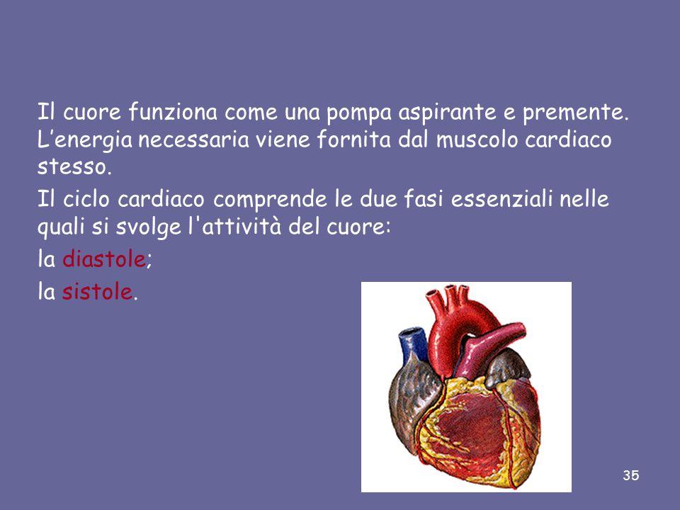 L'atrio sinistro comunica con il ventricolo sinistro attraverso la valvola mitrale (o bicuspide). 34