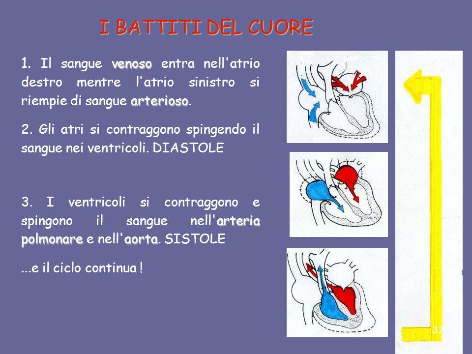 Con la diastole gli atri si contraggono. In questa fase, il sangue passa dagli atri ai ventricoli. Nella sistole, i ventricoli contraendosi, spingono