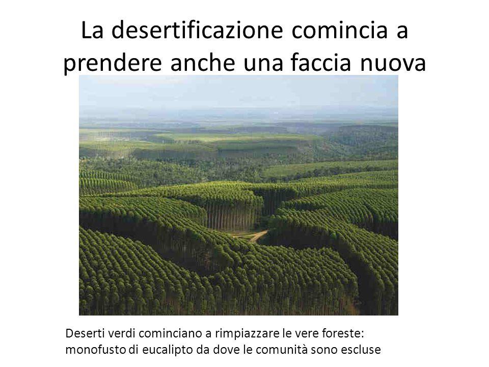 La desertificazione comincia a prendere anche una faccia nuova Deserti verdi cominciano a rimpiazzare le vere foreste: monofusto di eucalipto da dove le comunità sono escluse