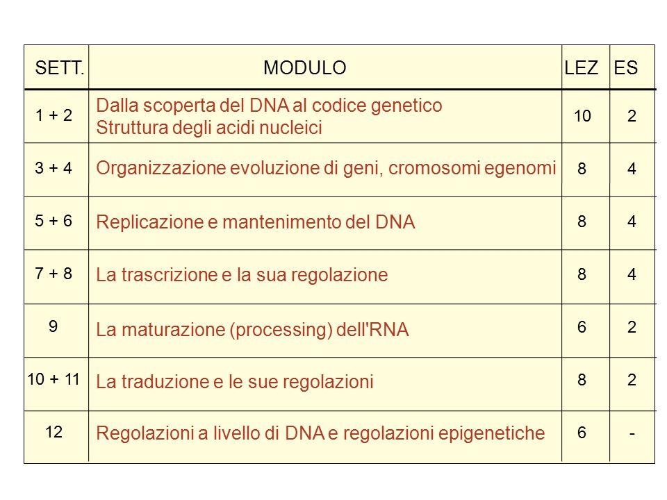 Dalla scoperta del DNA al codice genetico Struttura degli acidi nucleici Organizzazione evoluzione di geni, cromosomi egenomi Replicazione e mantenimento del DNA La trascrizione e la sua regolazione La maturazione (processing) dell RNA La traduzione e le sue regolazioni Regolazioni a livello di DNA e regolazioni epigenetiche 1 + 2 3 + 4 5 + 6 7 + 8 9 10 + 11 12 10 8 6 8 6 244422-244422- SETT.
