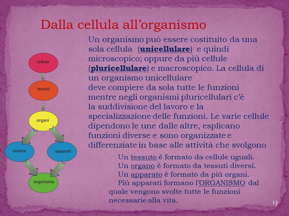 Un organismo può essere costituito da una sola cellula ( unicellulare ) e quindi microscopico; oppure da più cellule ( pluricellulare ) e macroscopico.