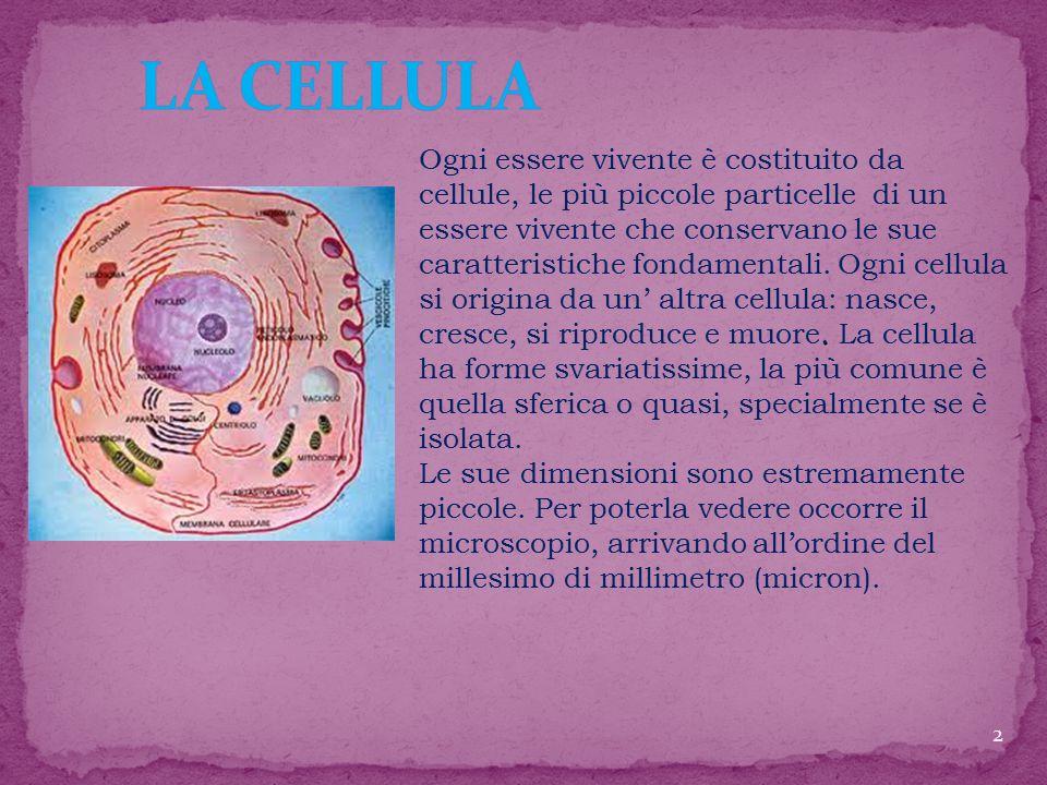Ogni essere vivente è costituito da cellule, le più piccole particelle di un essere vivente che conservano le sue caratteristiche fondamentali.