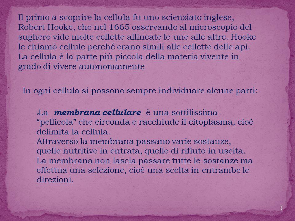 In ogni cellula si possono sempre individuare alcune parti:  La membrana cellulare è una sottilissima pellicola che circonda e racchiude il citoplasma, cioè delimita la cellula.