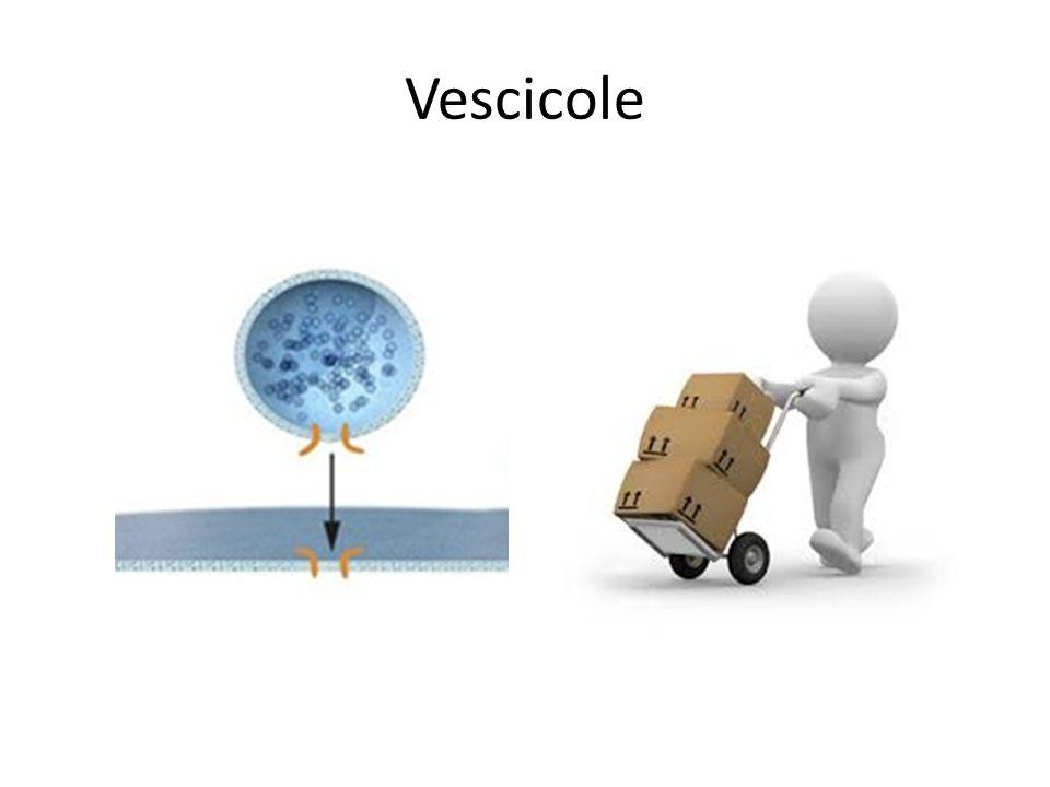 Vescicole