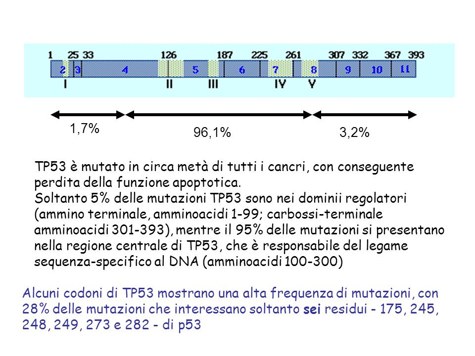 249 157 Sequence-Specific DNA Binding Domain NC EVOLUTIONARILY CONSERVED 17-29 97292324352 Missense Transactivation Domain Oligomerization and Nuclear Localization and Export Domains 0 Fumo tabacco Lung,Codon 157 G:C to T:A 78% ESEMPI DI MUTAZIONI DI p53 ASSOCIATI CON ESPOSIZIONE A CARCINOGENI Aflatossina B 1 and HBV Liver, Codon 249 G:C to T:A 98% 281 Sunlight Skin, Codon 281 CC to TT 100% 400 200 100 300 emocromatosi Liver, Codon 220 A:T to G:C 100%
