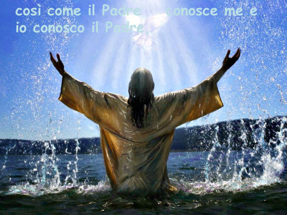 così come il Padre conosce me e io conosco il Padre,