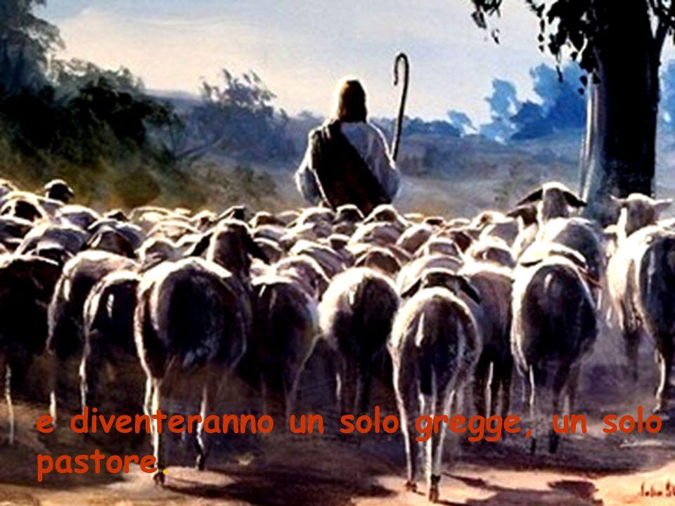 e diventeranno un solo gregge, un solo pastore.