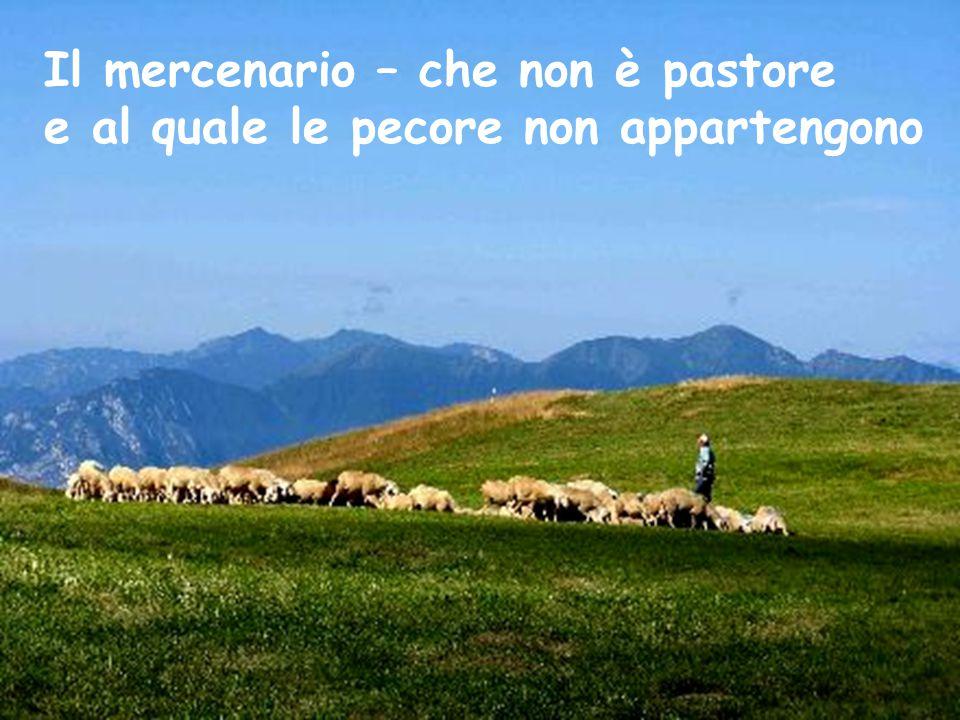 Il mercenario – che non è pastore e al quale le pecore non appartengono