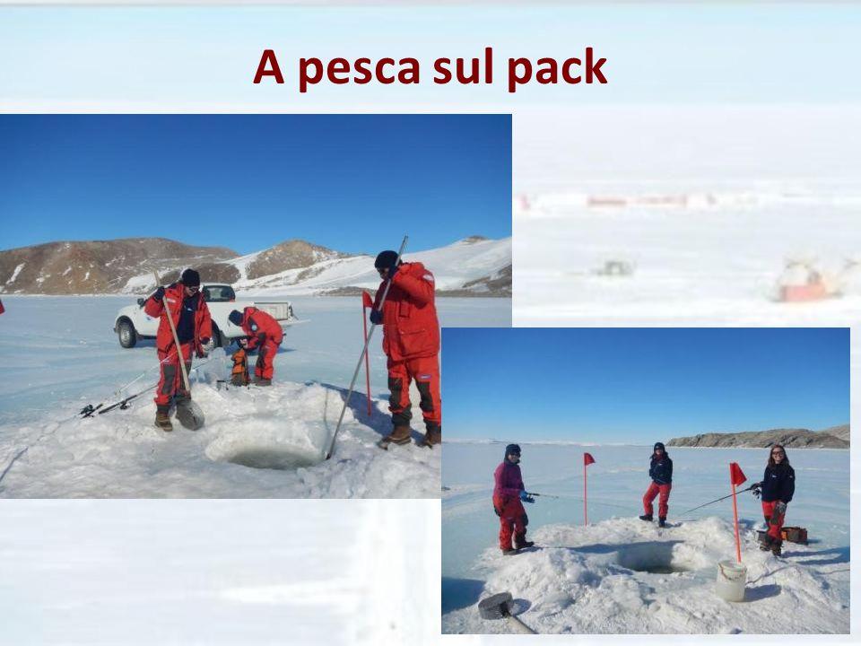 A pesca sul pack