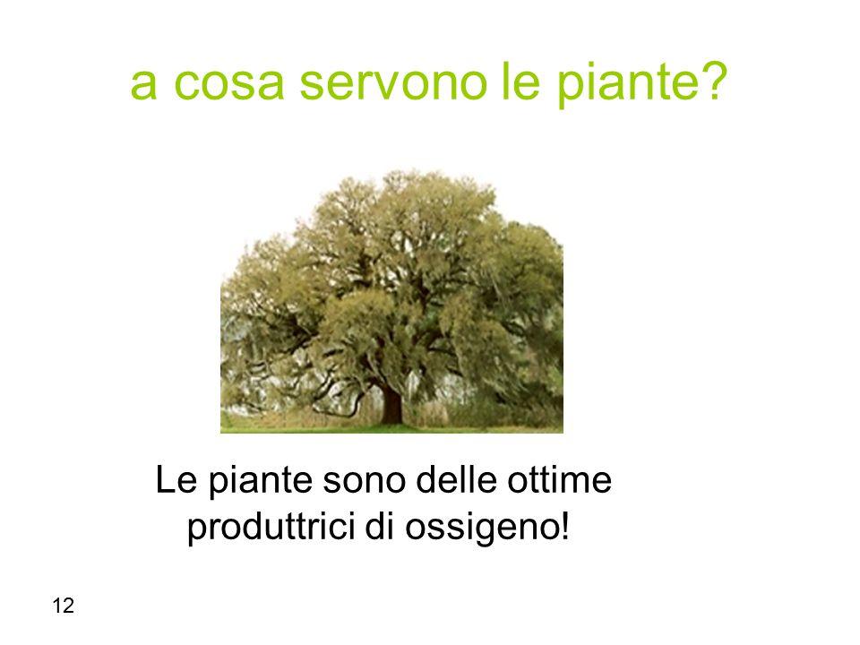 12 a cosa servono le piante? Le piante sono delle ottime produttrici di ossigeno!