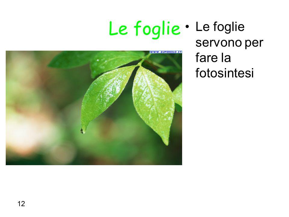 12 Le foglie Le foglie servono per fare la fotosintesi