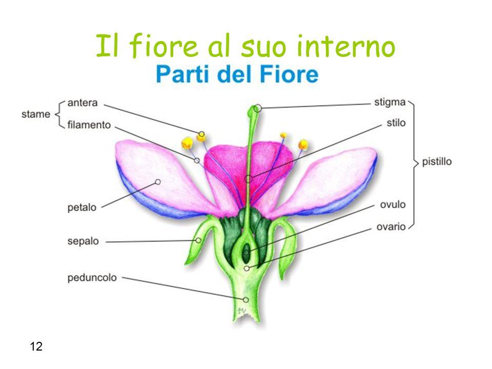 12 Il fiore al suo interno