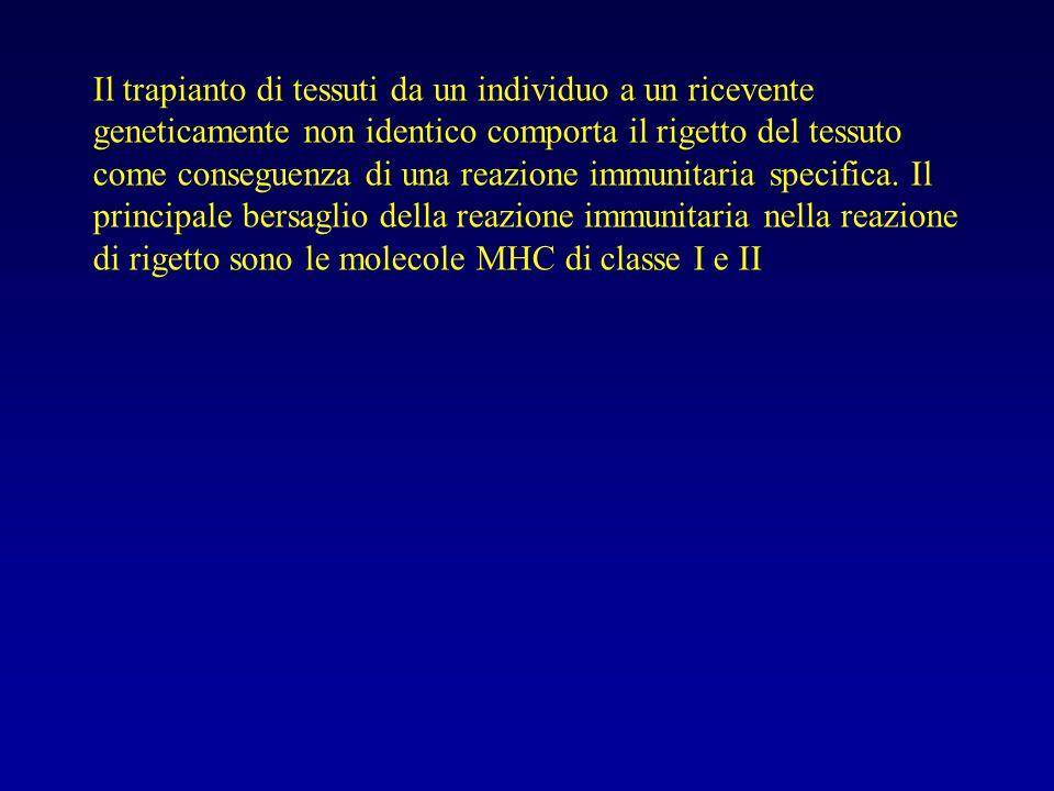 Il trapianto di tessuti da un individuo a un ricevente geneticamente non identico comporta il rigetto del tessuto come conseguenza di una reazione imm