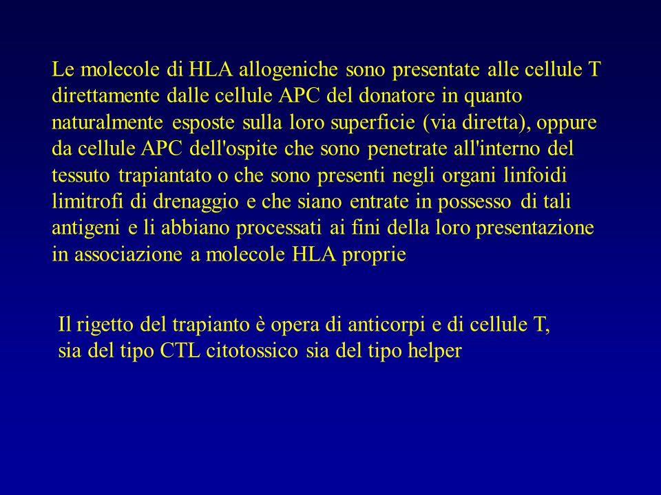 Le molecole di HLA allogeniche sono presentate alle cellule T direttamente dalle cellule APC del donatore in quanto naturalmente esposte sulla loro su