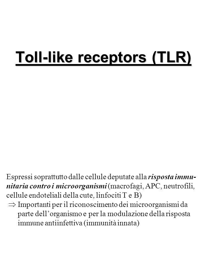 Toll-like receptors (TLR) Espressi soprattutto dalle cellule deputate alla risposta immu- nitaria contro i microorganismi (macrofagi, APC, neutrofili, cellule endoteliali della cute, linfociti T e B)  Importanti per il riconoscimento dei microorganismi da parte dell'organismo e per la modulazione della risposta immune antiinfettiva (immunità innata)