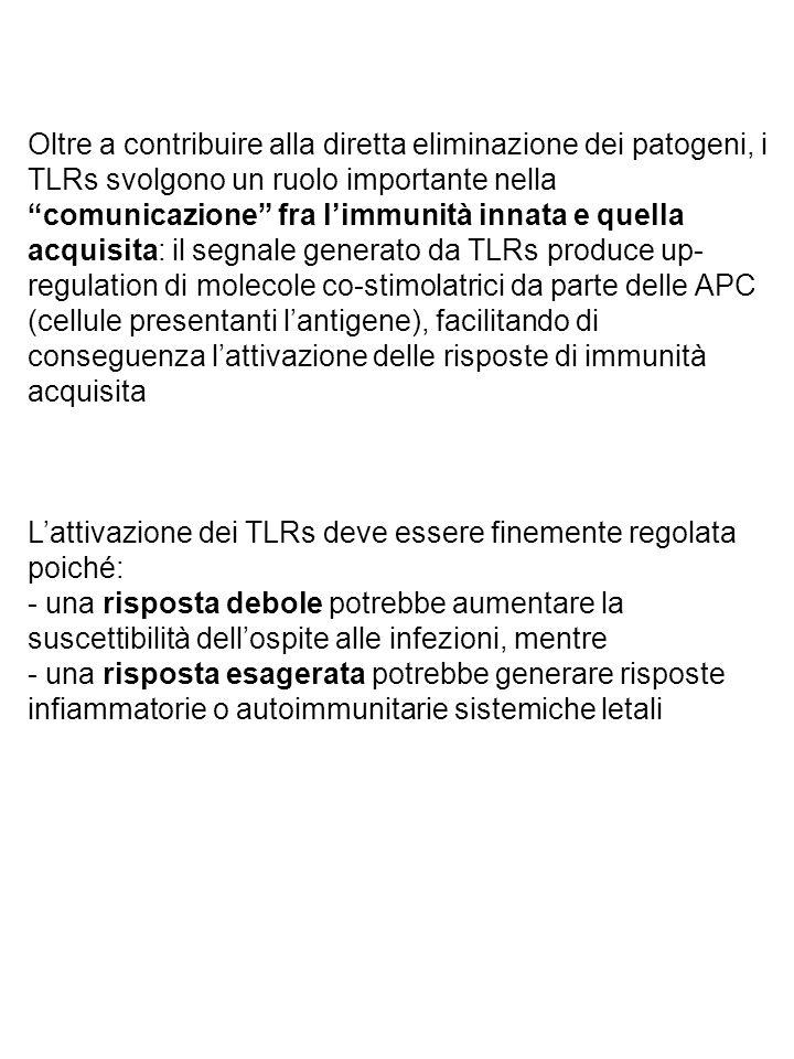 Oltre a contribuire alla diretta eliminazione dei patogeni, i TLRs svolgono un ruolo importante nella comunicazione fra l'immunità innata e quella acquisita: il segnale generato da TLRs produce up- regulation di molecole co-stimolatrici da parte delle APC (cellule presentanti l'antigene), facilitando di conseguenza l'attivazione delle risposte di immunità acquisita L'attivazione dei TLRs deve essere finemente regolata poiché: - una risposta debole potrebbe aumentare la suscettibilità dell'ospite alle infezioni, mentre - una risposta esagerata potrebbe generare risposte infiammatorie o autoimmunitarie sistemiche letali