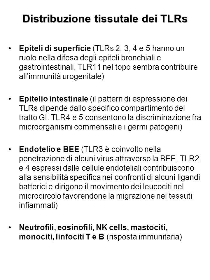 Localizzazione subcellulare dei TLRs TLRs 1, 2, 4, 5 e 6: localizzati sulla superficie cellulare per il riconoscimento dei patogeni extracellulari TLRs 3, 7, 8 e 9: intracellulari, contribuiscono al riconoscimento di prodotti di derivazione batterica localizzati all'interno della cellula che generalmente sono molto simili agli antigeni dell'ospite (ligandi: dsRNA o ssRNA virali, DNA procariotico) NB: risposte antibatteriche o antivirali complete si osservano solo quando i segnali mediati dai TLRs provengono sia dagli epiteli di superficie (dove avviene il primo contatto con l'agente patogeno) che dai leucociti (dove l'antigene è processato)