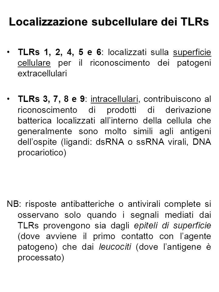 Ligandi dei TLRs  Molecole di natura patogena (es: LPS batterici, fosfolipidi di parassiti, RNA virale, DNA batterico o virale, etc.)  Proteine endogene (a seguito di danno tissutale): proteine della matrice extracellulare (fibronectina, fibrinogeno e acido ialuronico) e altri mediatori della risposta infiammatoria (eparan- solfato, beta-difensine e proteine dello shock termico)