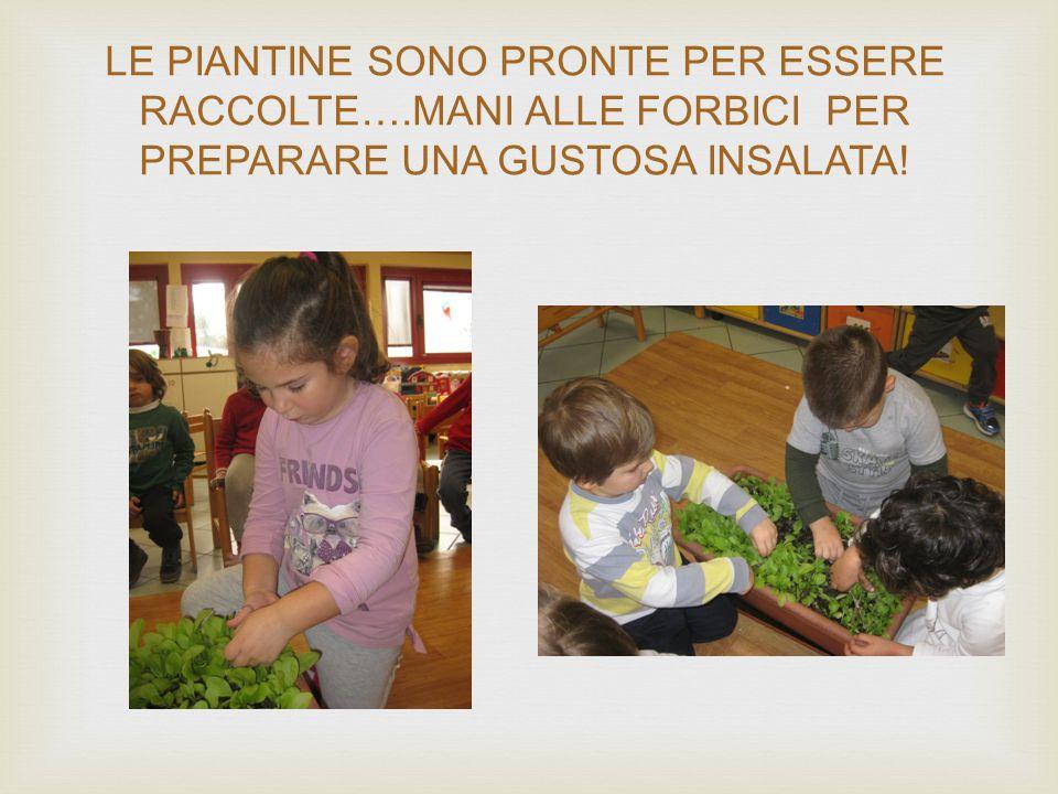  Un foglio più complesso suddiviso in sei parti sulle quali vi sono rappresentate le fasi di crescita della pianta che il bambino deve colorare, ritagliare e riordinare accompagnando l'attività con il racconto.