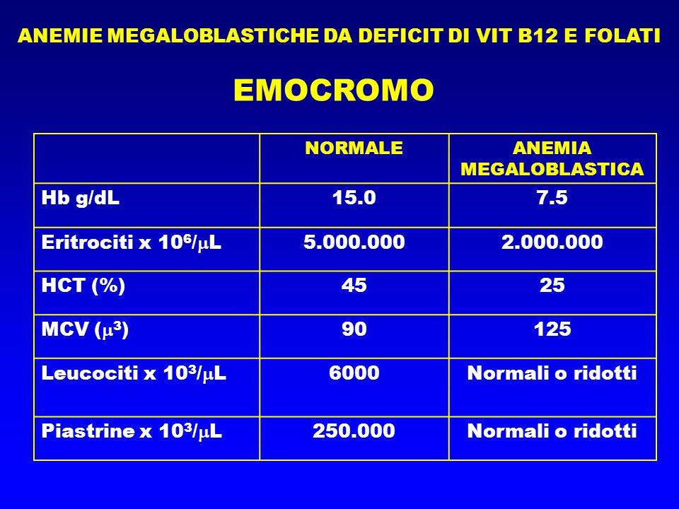 ANEMIE MEGALOBLASTICHE DA DEFICIT DI VIT B12 E FOLATI EMOCROMO NORMALEANEMIA MEGALOBLASTICA Hb g/dL15.07.5 Eritrociti x 10 6 /  L5.000.0002.000.000 HCT (%)4525 MCV (  3 )90125 Leucociti x 10 3 /  L6000Normali o ridotti Piastrine x 10 3 /  L250.000Normali o ridotti