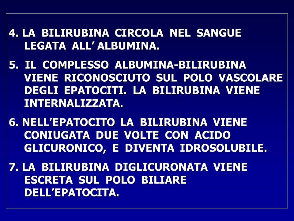 4.LA BILIRUBINA CIRCOLA NEL SANGUE LEGATA ALL' ALBUMINA.