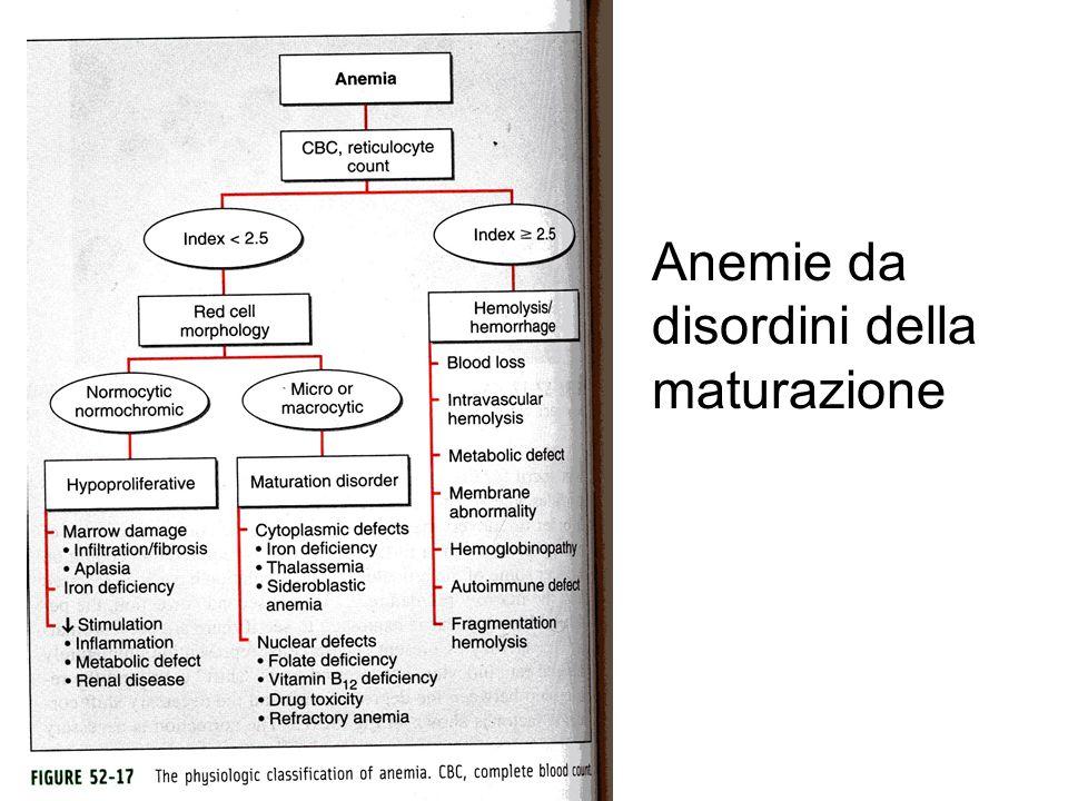 Classificazione anemie emolitiche Enzimi dello shunt degli esosomonofosfati e del metabolismo del glutatione –Glucosio -6-fosfato-deidrogenasi (G-6-PD) –Glutatione perossidasi (GSH-Px) –Deficit di Glutatione secondario a deficit di  glutammil-cisteina sintetasi –Glutatione-sintetasi –Glutatione-reduttasi Enzimi della via di Embden-Meyerhof –Esochinasi (HK) –Glucosio-fosfato-isomerasi (GPI) –Fosfofruttochinasi (PFK) –Aldolasi (ALD) –Trioso fosfato isomerasi (TPI) –Difosfoglicerato mutasi (DPGM) –Fosfoglicerato chinasi (PGK) –Piruvato chinasi (PK) Enzimi del metabolismo dei nucleotidi –Adenilato chinasi –Pirimidina 5'-nucleotidasi
