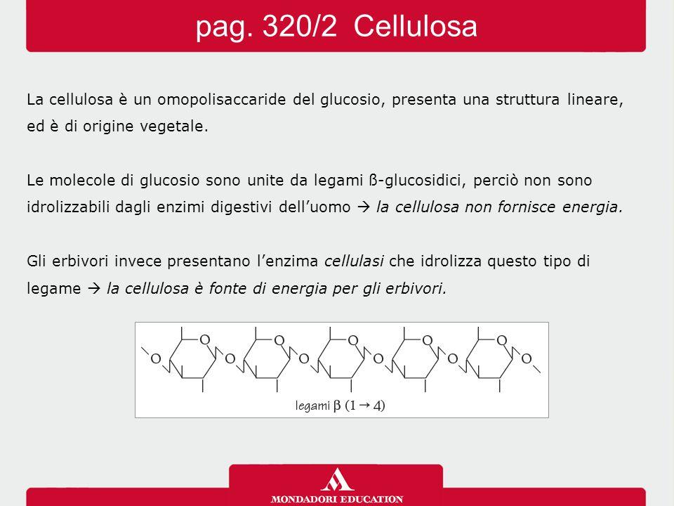 La cellulosa è un omopolisaccaride del glucosio, presenta una struttura lineare, ed è di origine vegetale. Le molecole di glucosio sono unite da legam