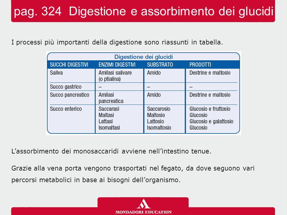 I processi più importanti della digestione sono riassunti in tabella. L'assorbimento dei monosaccaridi avviene nell'intestino tenue. Grazie alla vena
