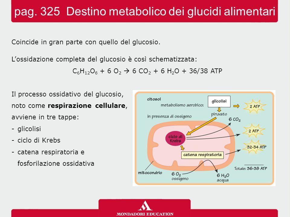 Coincide in gran parte con quello del glucosio. L'ossidazione completa del glucosio è così schematizzata: C 6 H 12 O 6 + 6 O 2  6 CO 2 + 6 H 2 O + 36