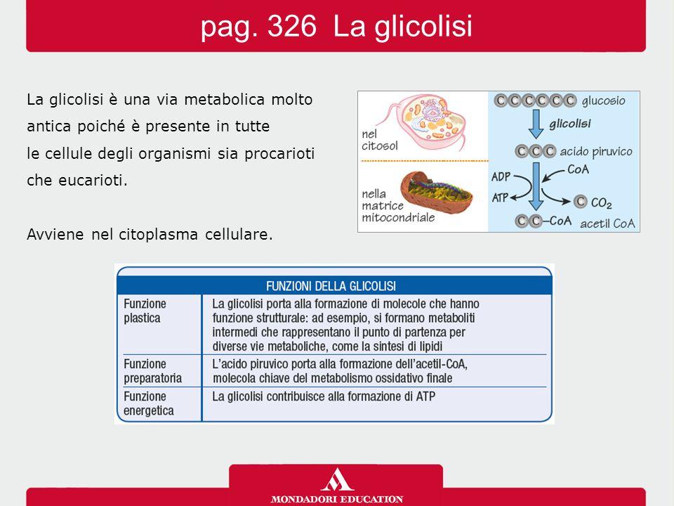 La glicolisi è una via metabolica molto antica poiché è presente in tutte le cellule degli organismi sia procarioti che eucarioti. Avviene nel citopla