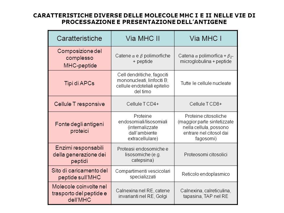 CaratteristicheVia MHC IIVia MHC I Composizione del complesso MHC-peptide Catene  e  polimorfiche + peptide Catena  polimorfica +  2 - microglobul