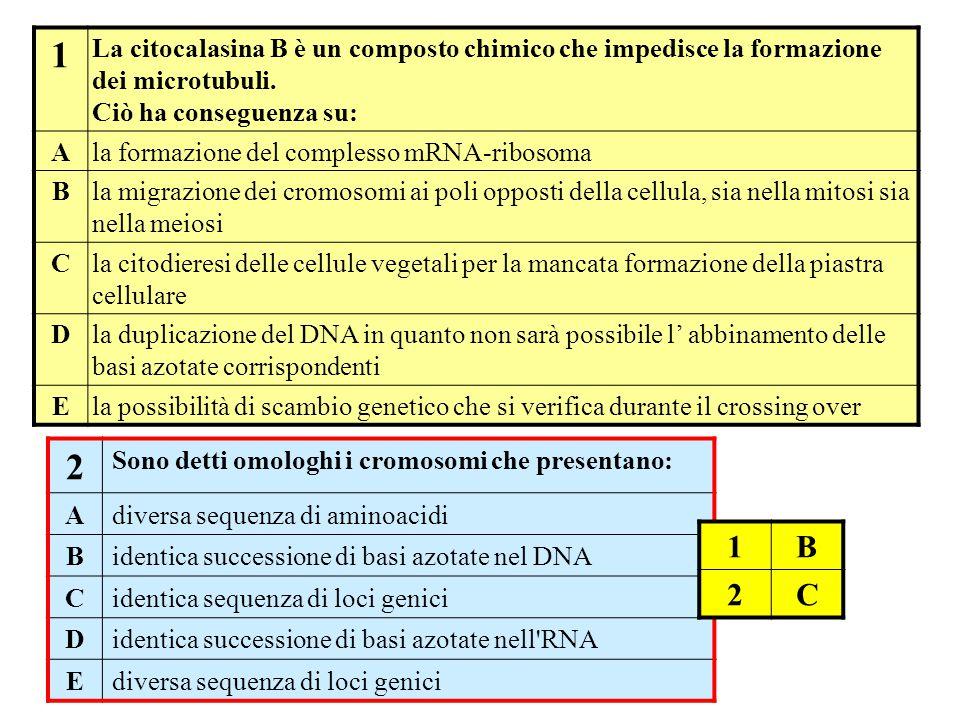 1 La citocalasina B è un composto chimico che impedisce la formazione dei microtubuli. Ciò ha conseguenza su: Ala formazione del complesso mRNA-riboso
