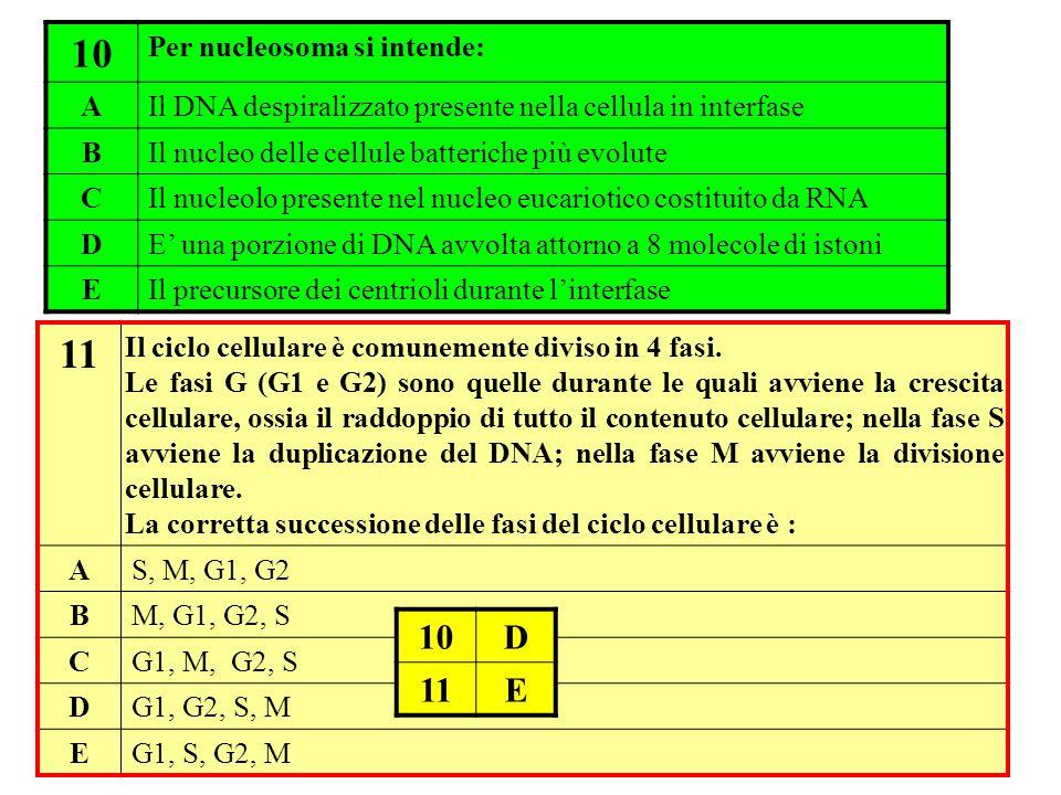 10 Per nucleosoma si intende: AIl DNA despiralizzato presente nella cellula in interfase BIl nucleo delle cellule batteriche più evolute CIl nucleolo
