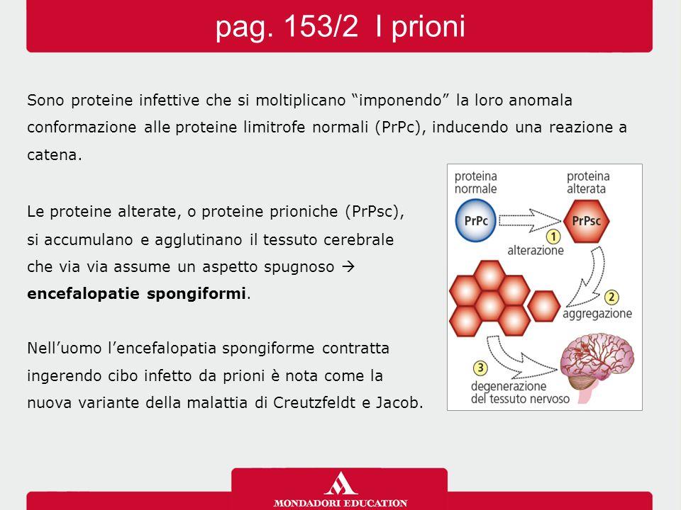 """Sono proteine infettive che si moltiplicano """"imponendo"""" la loro anomala conformazione alle proteine limitrofe normali (PrPc), inducendo una reazione a"""