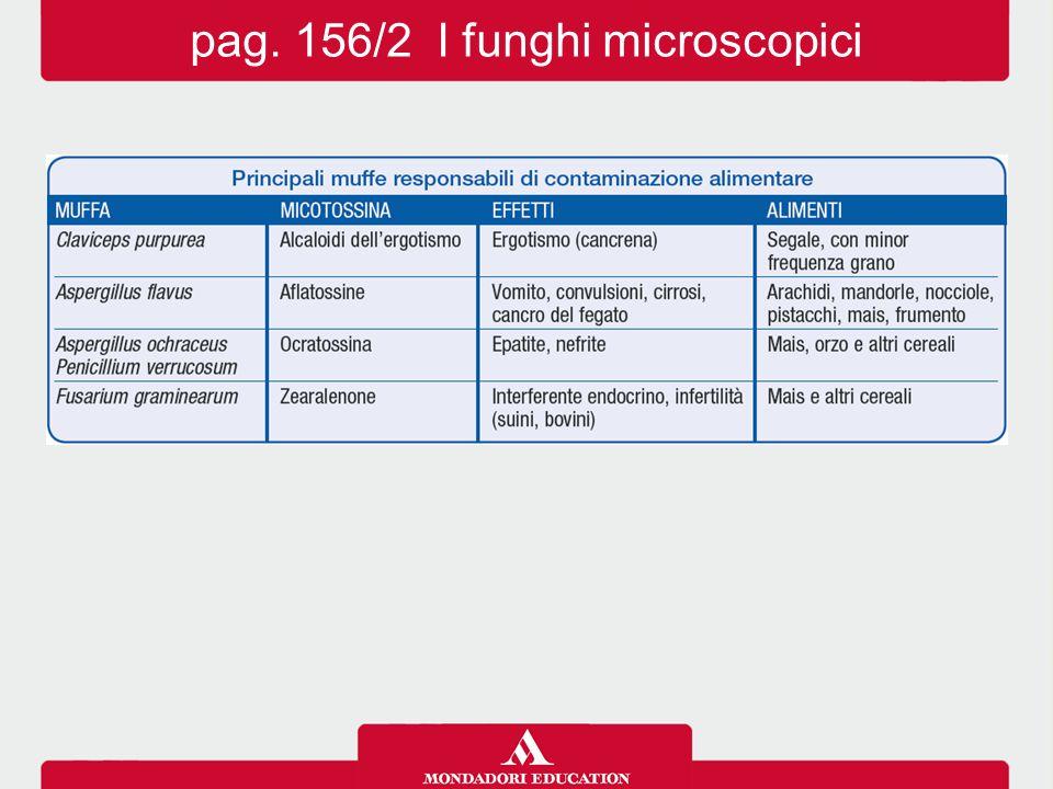 pag. 156/2 I funghi microscopici