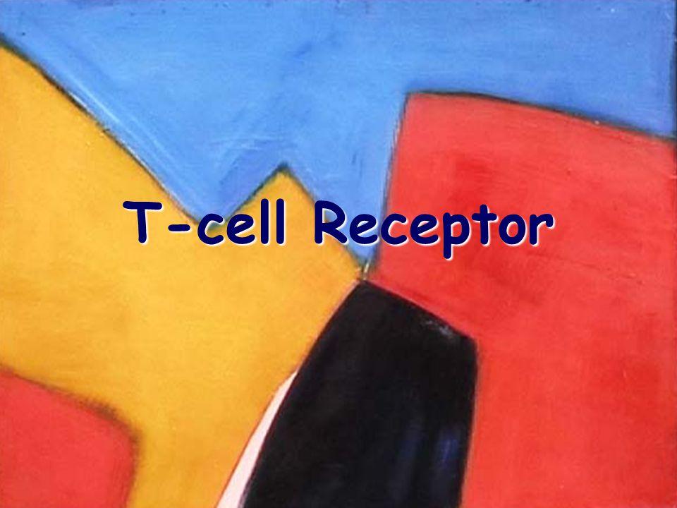 2/9/04 T-cell Receptor