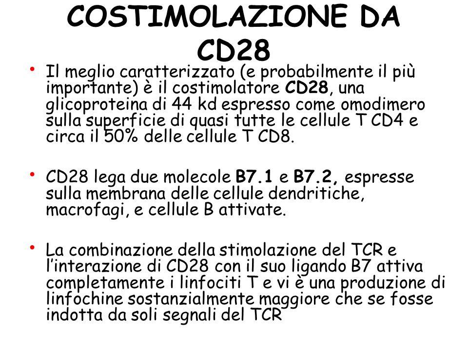 Signal 2 Costimulation In assenza della corretta costimolazione, la cellula T entra in uno stato refrattario alla stimolazione da parte dell'antigene.