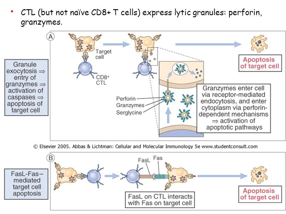 Th2 producono citochine che generalmente stimolano le risposte Ig (IL-4, -5, -6, -9, and -10). T-cell Subtypes IL-10 reprime l'attività delle cellule