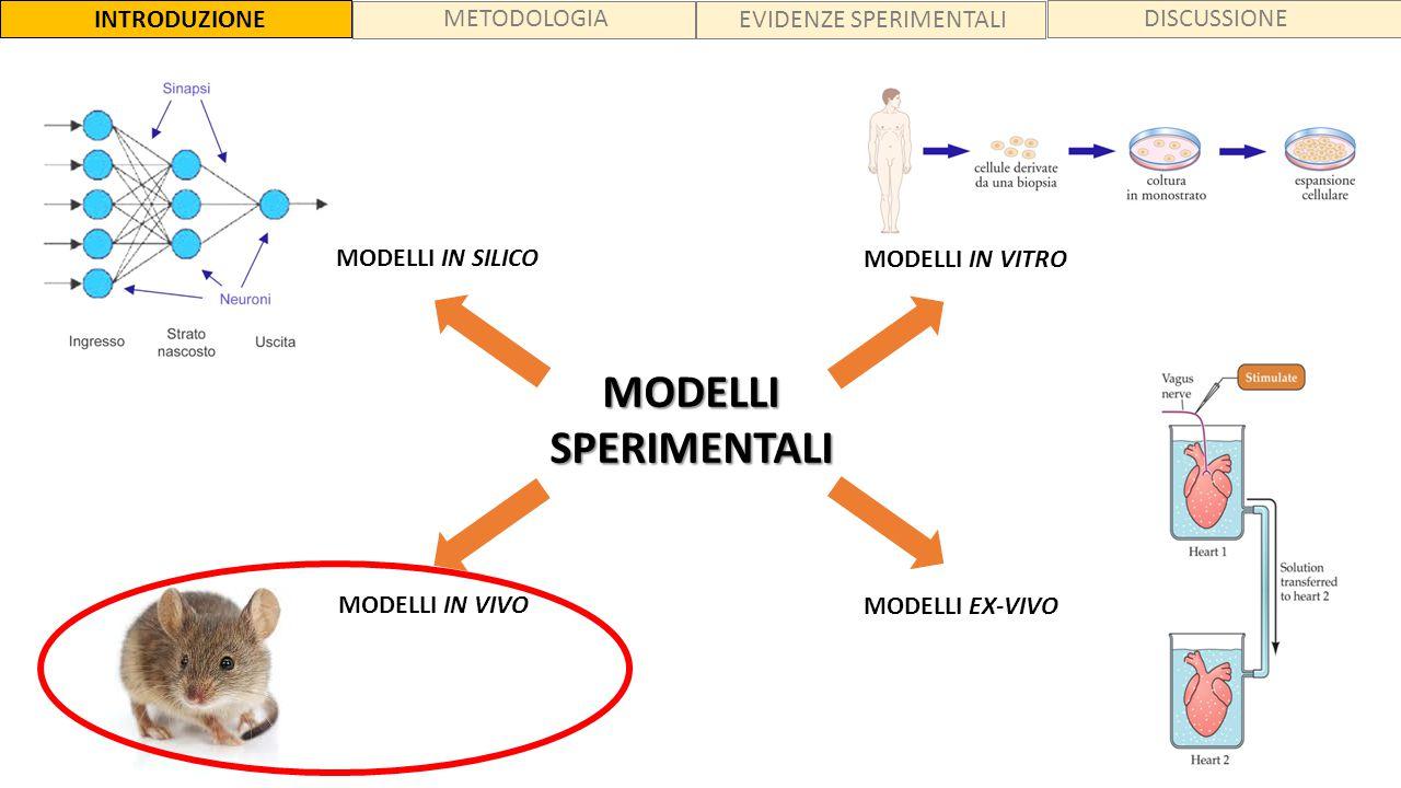 MODELLISPERIMENTALI MODELLI IN SILICO MODELLI IN VIVO MODELLI IN VITRO MODELLI EX-VIVO INTRODUZIONE MATERIALI e METODI ESPERIMENTI e RISULTATI CONCLUS