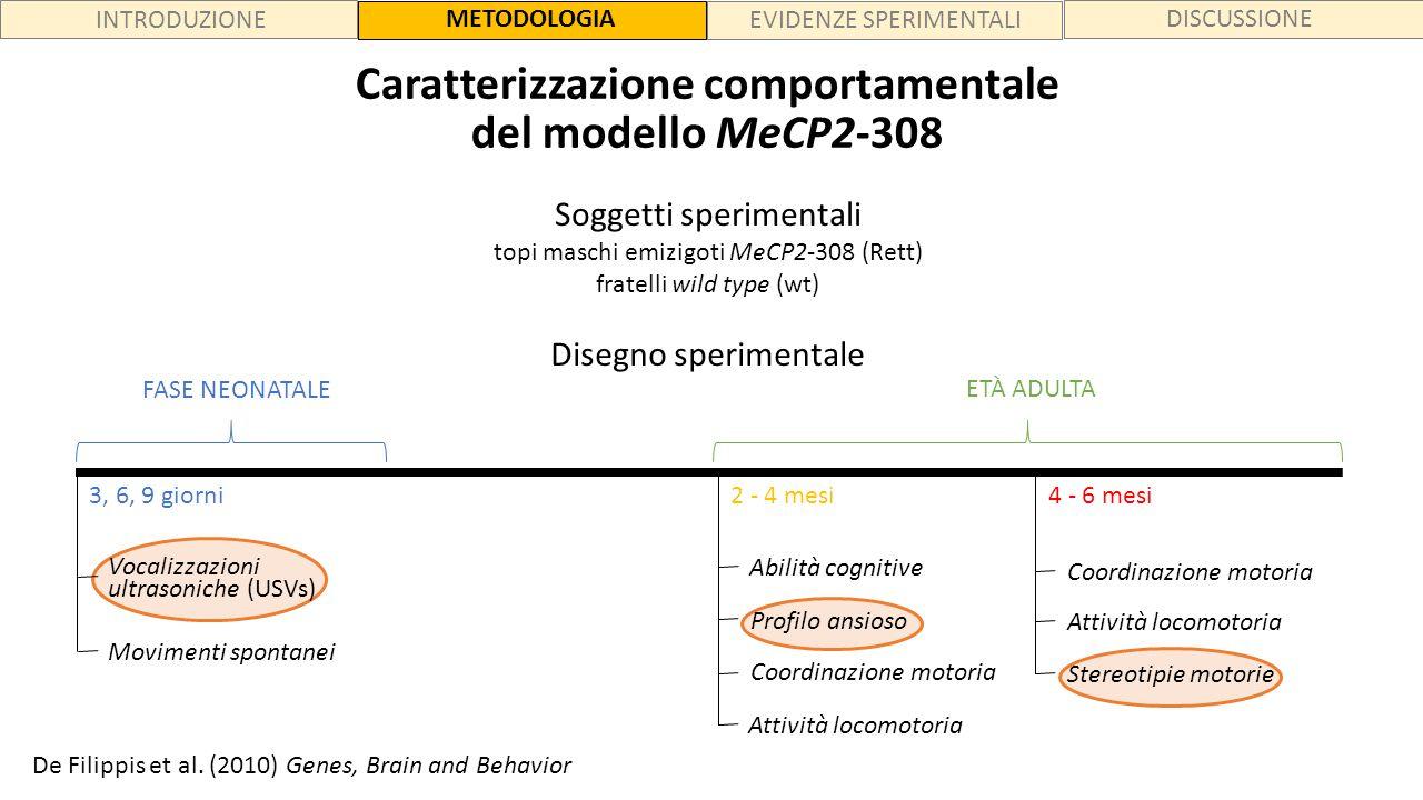 INTRODUZIONE METODOLOGIA EVIDENZE SPERIMENTALI DISCUSSIONE Caratterizzazione comportamentale del modello MeCP2-308 Soggetti sperimentali topi maschi e
