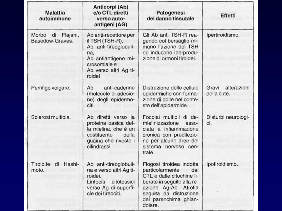 TOLLERANZA ACQUISITA Anche i linfociti che riconoscono antigeni estranei possono diventare tolleranti