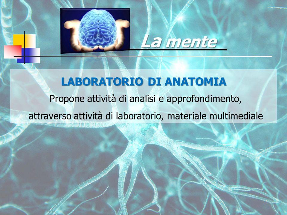 La mente LABORATORIO DI ANATOMIA Propone attività di analisi e approfondimento, attraverso attività di laboratorio, materiale multimediale