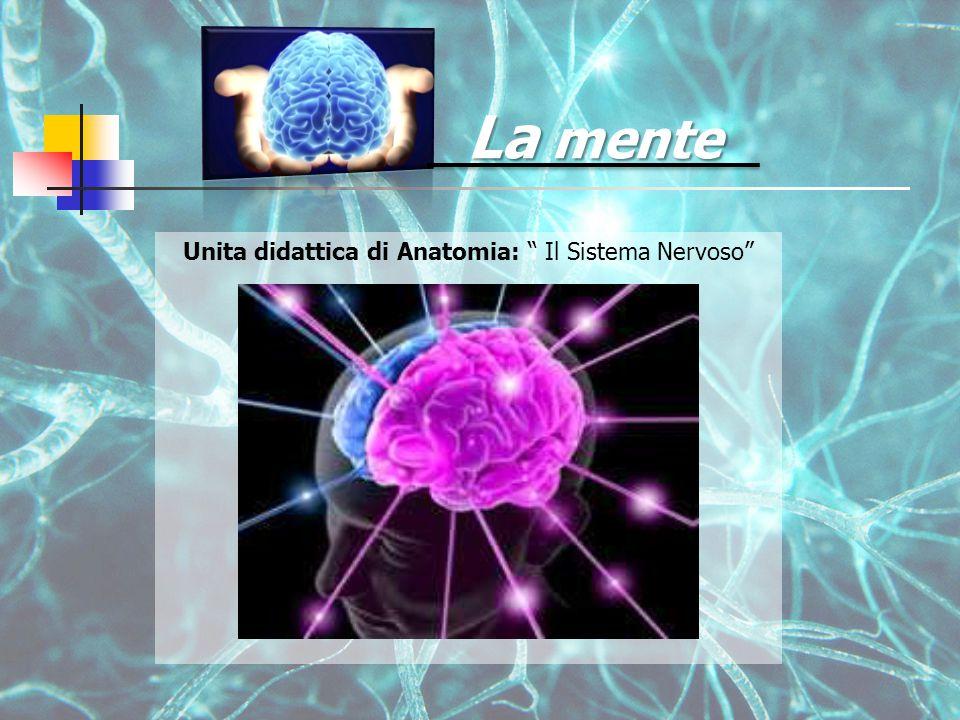 La mente Unita didattica di Anatomia: Il Sistema Nervoso