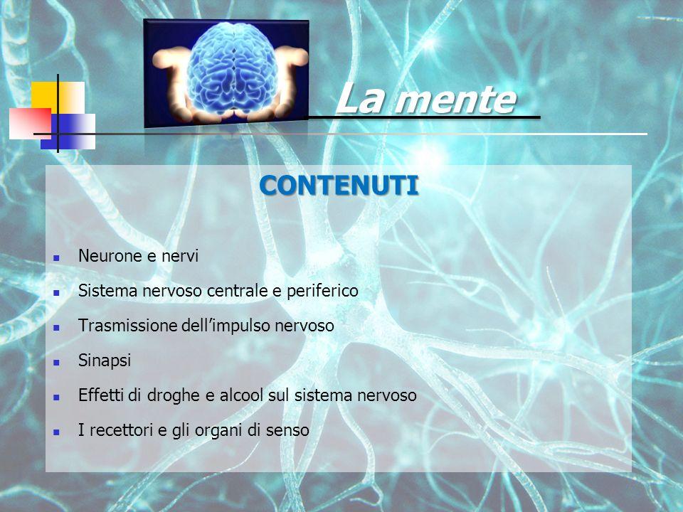 CONTENUTI Neurone e nervi Sistema nervoso centrale e periferico Trasmissione dell'impulso nervoso Sinapsi Effetti di droghe e alcool sul sistema nervoso I recettori e gli organi di senso